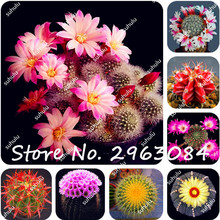 100Pcs Rare Cactus Seeds Meaty Plant Seeds Succulent Bonsai Plants Seeds For Home Garden Flowering Plant Radiation Absorption(China)