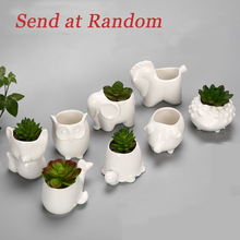 White Small Porcelain Cartton Animal Flower Pot Mini Elephant Snail Tortoise Owl Garden Planter Ceramic Pot Pottery Glazed Pot