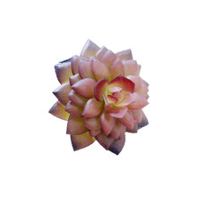 Wholesale 240pcs Mini PURPLE Artificial Succulent Plant Desert Rose Plastic Flower Echeveria Star Table Decoration Free Shipping(China)