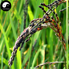 Buy Black Rice Seeds 150pcs Plant Grain Oryza Sativa For Food Paddy(China)