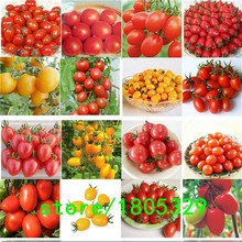 100PCS 24 KINDS Tomato Seeds Mixed Pack Purple Black Red Yellow Green Cherry Peach Pear Tomato Seed Organic Food Graden
