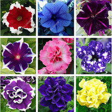 100Pcs Petunia Seeds,Flowers Petunia,Beautiful Bonsai Flower Seeds,Natural Growth Petunia Plant Pot for Home Garden Potted Plant