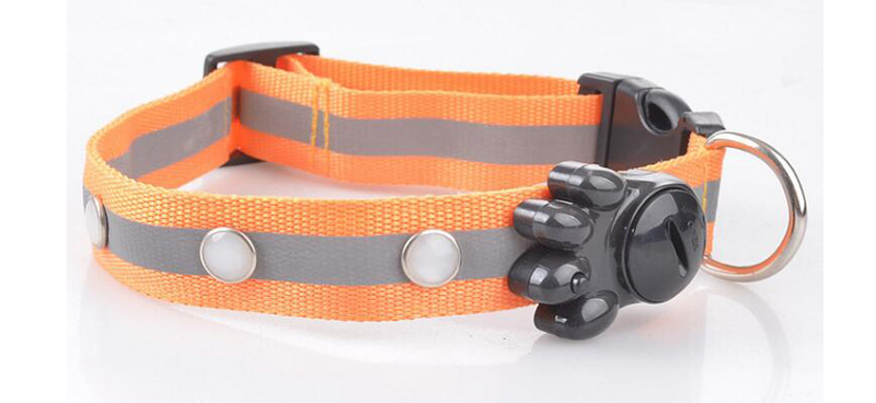 dog collar for small dogs (7)