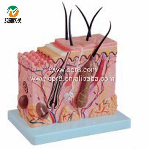 BIX-A1059 Neutral Skin Amplification Model Medical Aids WBW403<br>