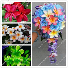 100pcs seeds Plumeria Hawaiian Foam Frangipani Flower For Wedding Party Decoration Romance Exotic Flower Seeds Egg Flower Seeds