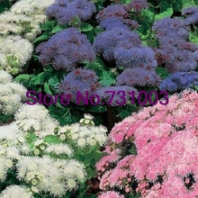 50+seeds/packageratum Rare Hawaii Mix Flower Seeds Garden Bonsai