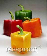 Rarest Mixed Orange Green Red Yellow Square Sweet Pepper Seeds, 100 Seeds / Pack, Edible Tasty Vegetables