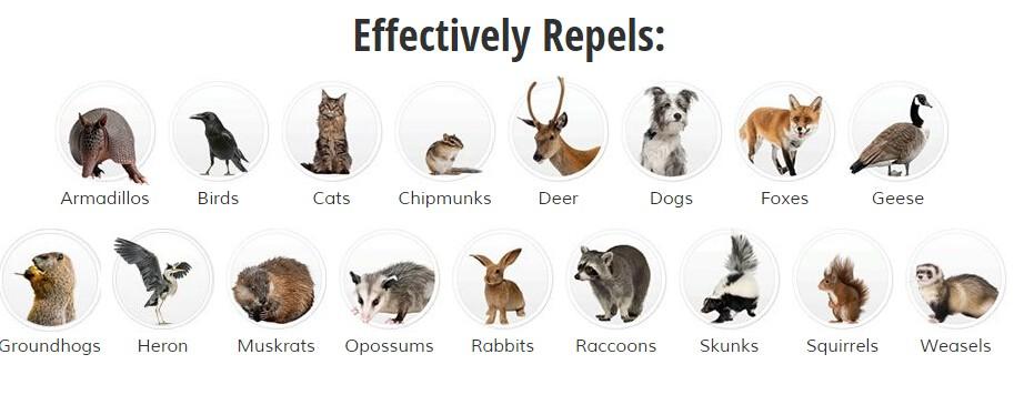 31004 repel animal type