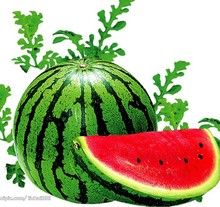 Organic vegetable seeds watermelon seeds mines 30 seeds small family garden