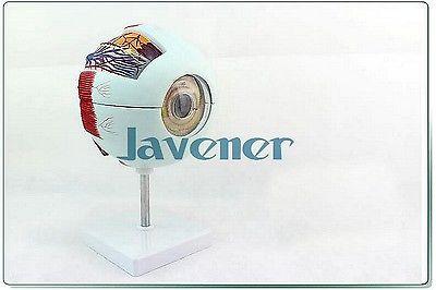 Magnify Human Anatomical Eyeball Anatomy Medical Model<br><br>Aliexpress