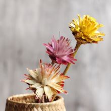 Feather Chrysanthemum Natural Dried Flowers,Home Furnishing Floral Decoration Material, The Restaurant Cafe Bar Wedding Decorat(China)