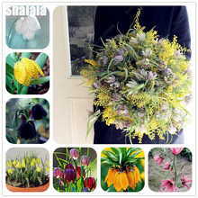 30Pcs Rare Crown Imperial Seeds Wang Fritillaria Seeds DIY Home Garden Ground Cover Flower Ornamental-plant Potted(China)