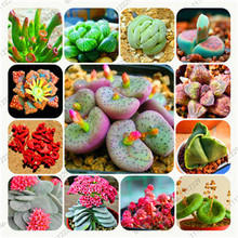 Bonsai flowers indoor fleshier plant, lithops stone flowers seeds, succulent seed, bonsai cactus plant - 200 pcs seeds(China)