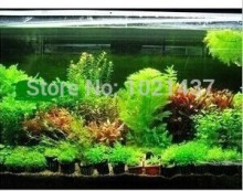 Promotion!!! 1500 seeds 15 kinds aquarium fish tank grass seeds water Aquatic plant seed DIY Free shipping