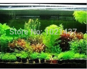Promotion!!! 1500 seeds 15 kinds aquarium fish tank grass seeds water Aquatic plant seed DIY Free shipping(China (Mainland))