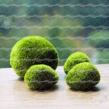 200pcs sphagnum moss bonsai moss seeds Super lovely moss ball decorative grass seeds ornamental-plant potted DIY plant