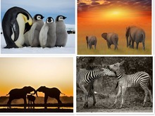 NEW 5D DIY Hot picture cross stitch full hand diamond mosaic Elephant zebra or penguin diamond painting livingroom gift R330(China)