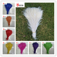 50 PCS/natural all sorts of color peacock feathers in the eye, 10 to 12 inches of the peacock feather wedding decoration plume