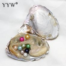 7-8mm Vacuum Pack Oyster Wish Freshwater Pearl Dyed Beads 14 Color Mussel Shell With Pearls Inside For DIY Jewelry Wedding Gift