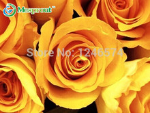 50PCS Garden Bonsai Planting China Rare Yellow Rose Flower Seeds Rosa Semillas Dancing Queen Gift For Lover