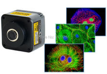 Free shipping,CE,5.0M+USB2.0 Top microscope digital fluorescence CCD cameras for windowsXP/Vista/W7/W8/MAC+ TE-cooling