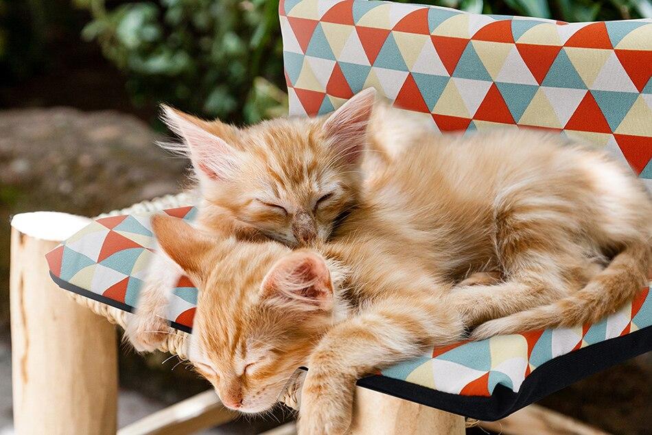 kedi yataklari