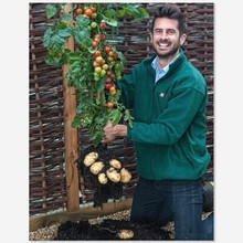 Tomtato Seeds Harvest Both Tomatoes AND Potatoes From This Unique plant! All Natural - 5 pcs/lot