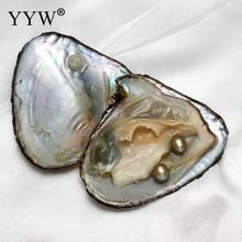 Love Wish Pearl Oyster Shell Wish Pearl Oyster 7-8mm in Vacuum-packed rice color akoya oyster Jewelry