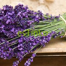 200pcs/lot French Provence Lavender Seeds Purple Flower Lavandula Fragrant Bush Seeds of Perennial Flower Garden Free Shipping(China)