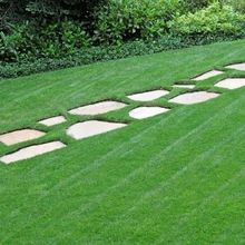 200 pretty Lawns grass Seed low Maintenanceideal lawn Easy Growing for home garden F004(China)