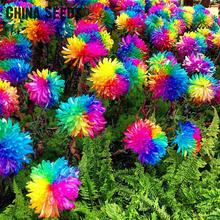 2016 Sale 100 Pcs Novel Rainbow Chrysanthemum Seeds Bonsai Flower Seeds For Home Gardening Diy Plant Sementes Free Shipping
