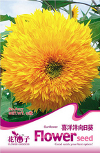 Buy 2 Get 1!(Can accumulate ) 1 Pack 15 seed Happy Sunflower flower Vegetables A107