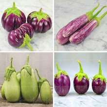 100pcs/bag purple eggplant seeds,Rare Aubergine, Organic fruit vegetable Seeds , Non GMO vegetable plant for home garden