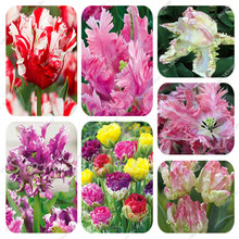 10PCS High-grade Flower Seeds Garden Tulip Seed Bonsai Seeds Balcony Pot Most Beautiful * Colorful Plants Seed Not Flower Bulbs