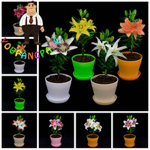 Cheap Perfume Lilies Seeds 100 Pcs Lily Seeds, Mixed Different Rare Flower Plant Bonsai Perennial Garden Flowers Hot Sale(China)