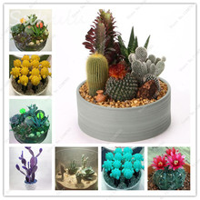 Meat Cactus Seeds 10 Pcs Rare Succulents Plant  Balcony Bonsai Plants Seed Anti-radiation Diy Home Garden Gecoration Mixed