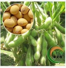 Delicious seeds soybean seed bean sprouts can do a variety of soy milk planting delicious vegetable seed planting
