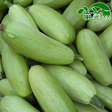 Free shipping/Min 15 usd/ Jaster jade patty-pan seeds type 10g
