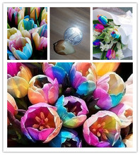 10PC world rare rainbow tulip bulbs. The most beautiful flower seeds. Simple bonsai. Garden Plants(China)
