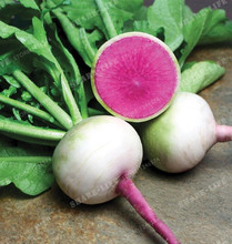 300 Watermelon Red Radish Seeds Delicious Vegetables very tasty crisp,Nice DIY Vegetables Gardeb four seasons can be sown(China)