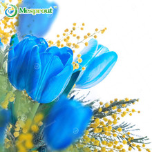 Best-Selling Rare Blue Tulips Flowers Seeds Bonsai Tulip Seeds Flower Plants 10 Particles / lot 24 Colors(China)