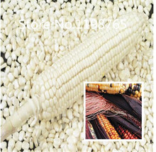 Special Price Promotion! 10 corn Seeds 10 kinds mixed packed, Vegetable Seeds High Germination DIY Garden Perennial Blooming Pla(China)