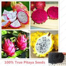 Pitaya Seeds Perennial Plants Fruit Tree Bonsai Plants White red yellow Dragon Fruit Tree Seeds for Home & Garden 100seeds/bag