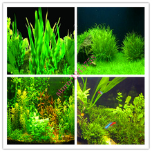 200pcs aquarium plants aquarium seeds Grass Seeds Water Grasses decorative landscaping new turf seed indoor for home garden(China)