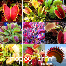 New Seeds 2017!3 Kinds Flytrap Seed Bonsai Potted Dionaea Muscipula Plant Seed Terrace Garden Carnivorous Plant Seed 100 Pieces,