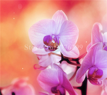 2016 Diy diamond painting cross stitch flower orchid crystal round diamond sets unfinished decorative Diamond Embroidery