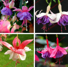 Hot selling 50pcs Fuchsia, fuchsia seed, crabapple, lantern flowers, potted indoor balcony DIY home garden free shipping