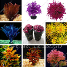 New Arrival 200 Pcs Rare Exotic Aquarium Plants Seeds,Fish Tank Background Decoration Grass Seed,Garden Plant Seeds Mixed Color(China)