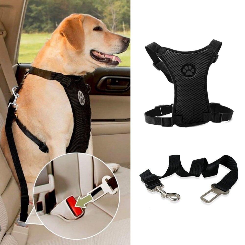 Dog Harness Leash Image