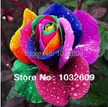 300 seeds rose Rainbow Rose Flower Seeds Mystic Rainbow cuttings of roses sementes de flores For Home Bonsai FTR001